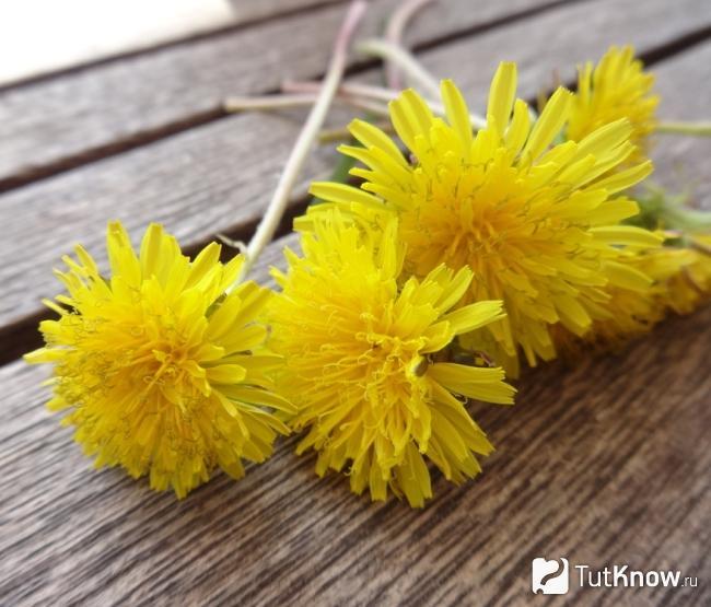 gyógyító növények, amelyek helyreállítják a látást)
