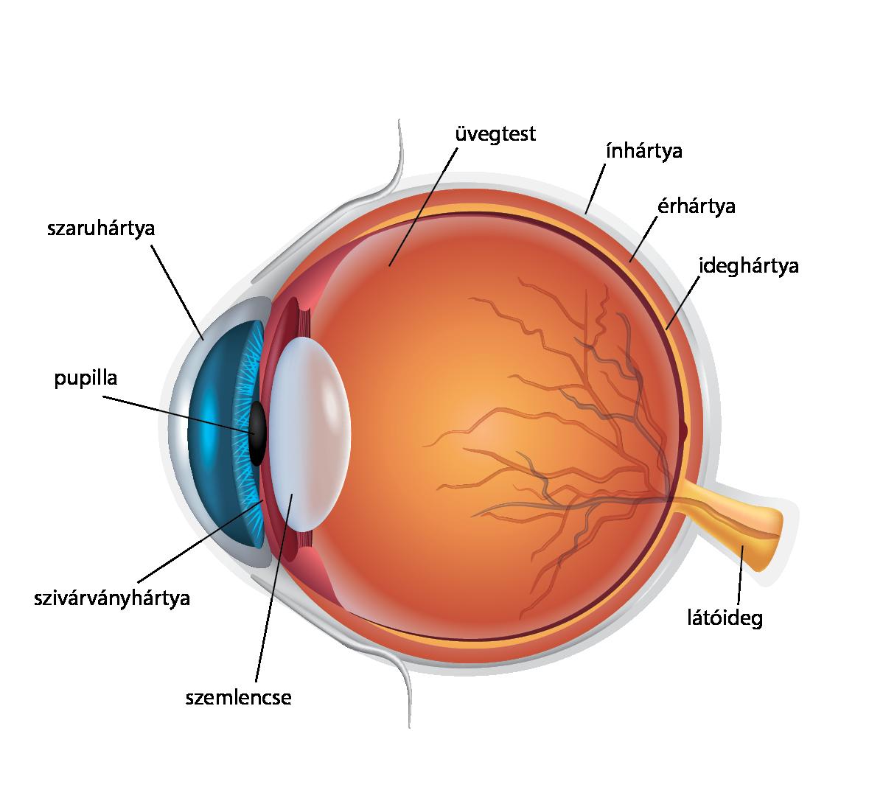 jobb látás gyakorlatokkal
