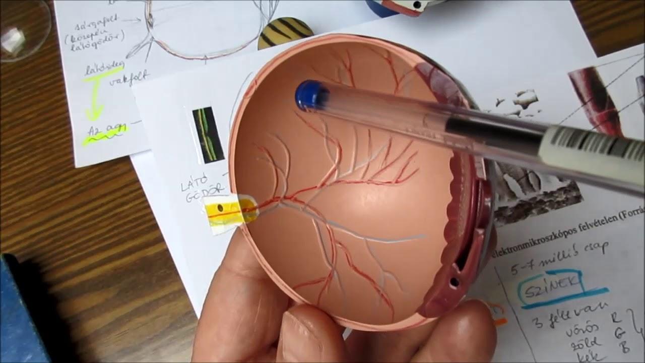 mit érdemes enni a látás helyreállításához