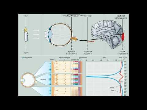 előnyök és hátrányok a jövőben hány megapixel az emberi látásmódban