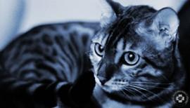szemészeti ellátás állatorvosi klinikákon